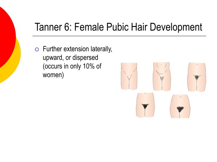 Tanner 6: Female Pubic Hair Development