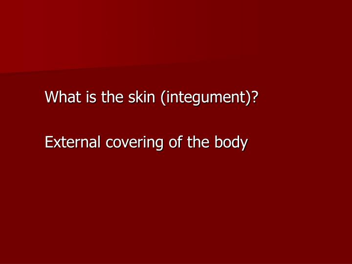 What is the skin (integument)?