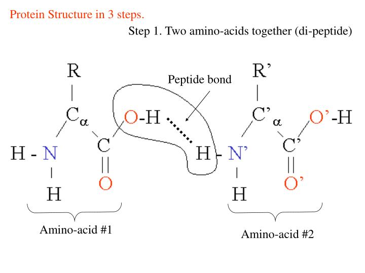 Protein Structure in 3 steps.