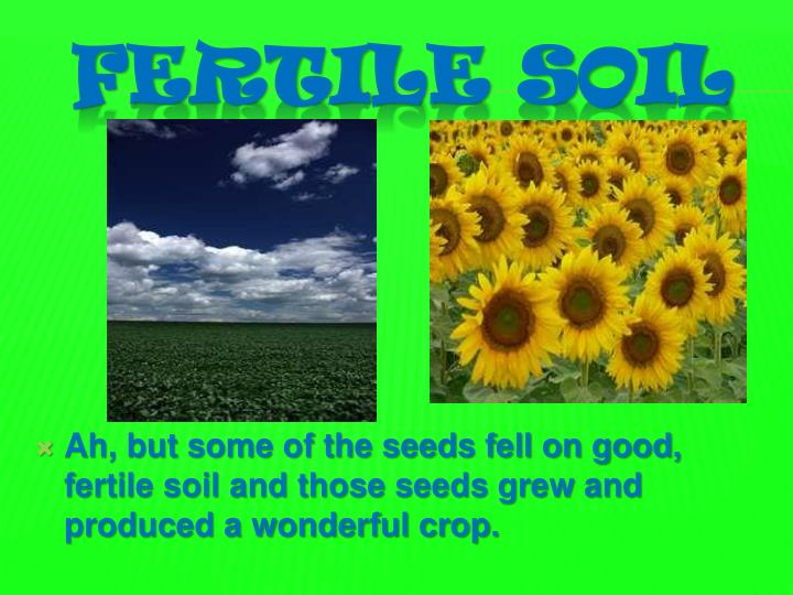 Ah, but some of the seeds fell on good, fertile soil and those seeds grew and produced a wonderful crop.