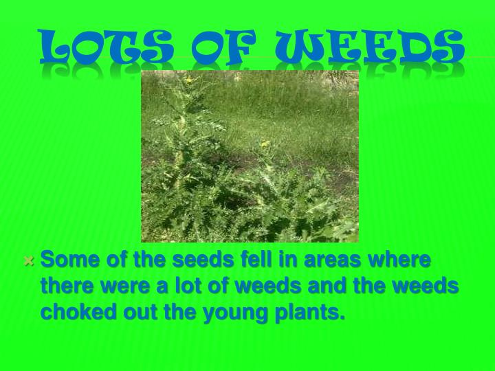 Some of the seeds fell in areas where there were a lot of weeds and the weeds choked out the young plants.