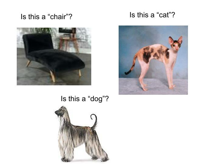 "Is this a ""cat""?"