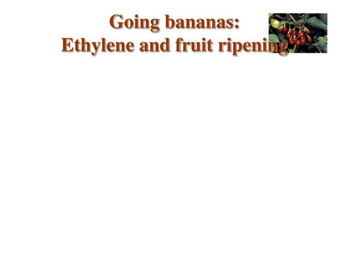 Going bananas: