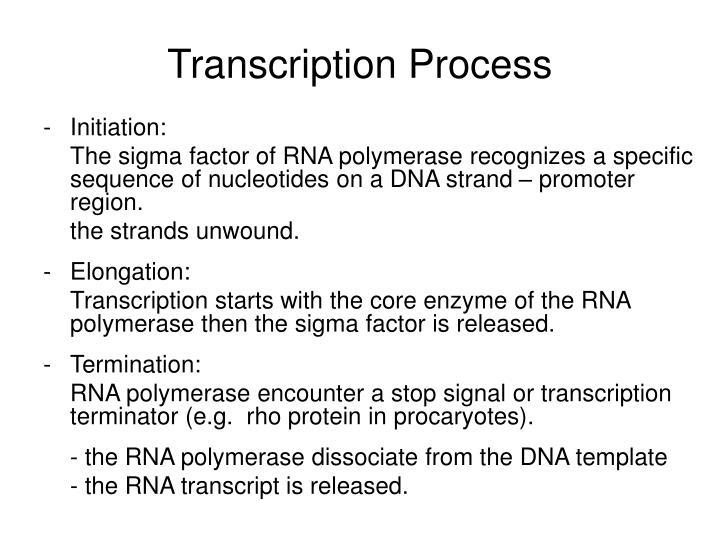 Transcription Process