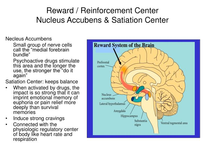 Reward / Reinforcement Center