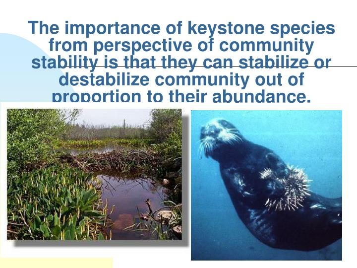 The importance of keystone species from perspective of community stability is that they can stabilize or destabilize community out of proportion to their abundance.