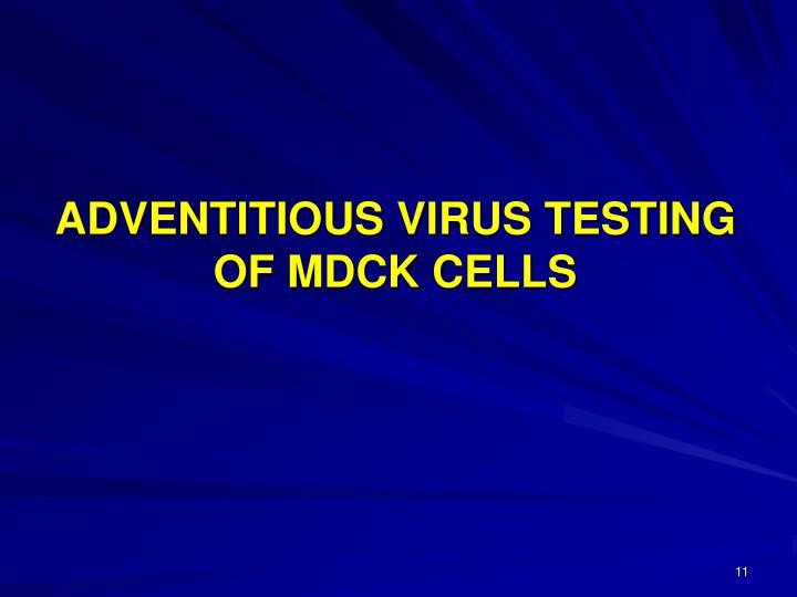 ADVENTITIOUS VIRUS TESTING OF MDCK CELLS