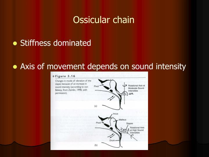 Ossicular chain