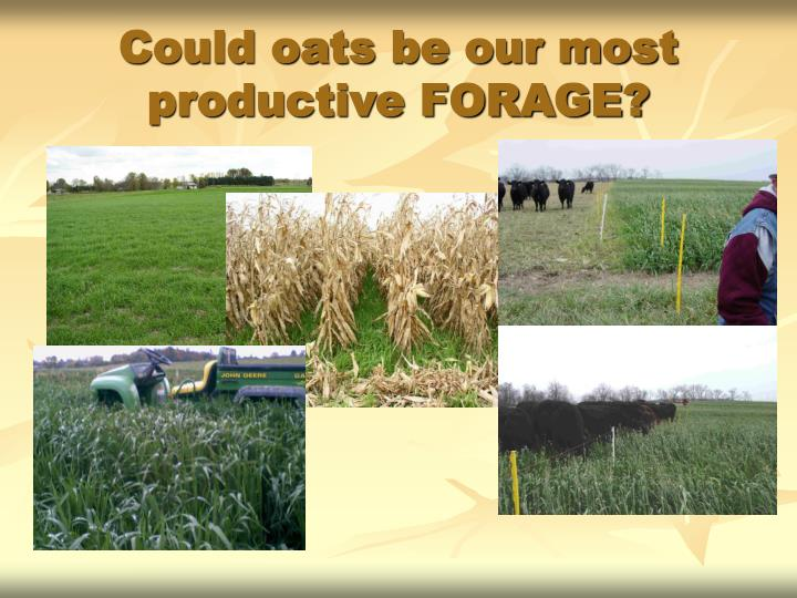Could oats be our most productive FORAGE?