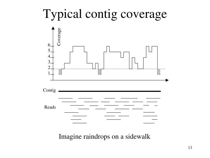 Typical contig coverage