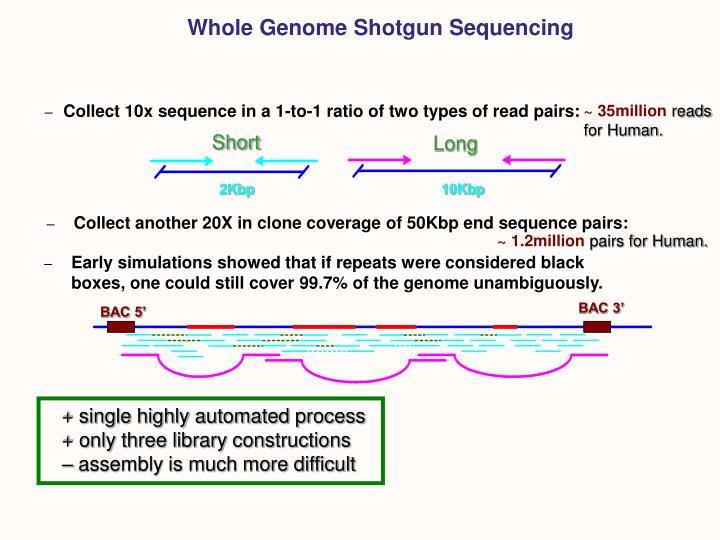 Whole Genome Shotgun Sequencing