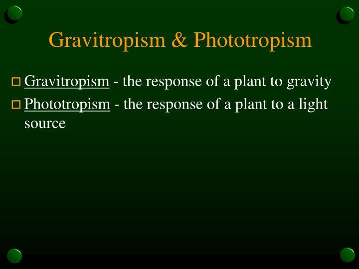 Gravitropism & Phototropism