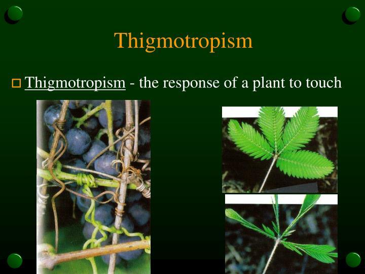 Thigmotropism