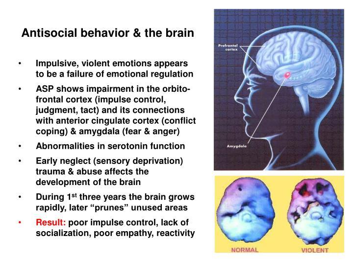 Brain serotonin