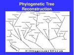 phylogenetic tree reconstruction