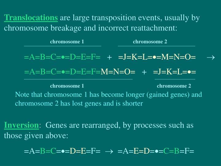chromosome 1