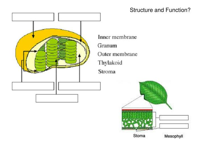 Structure and Function?