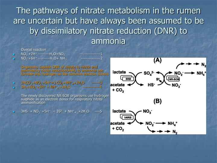The pathways of nitrate metabolism in the rumen are uncertain but have always been assumed to be by
