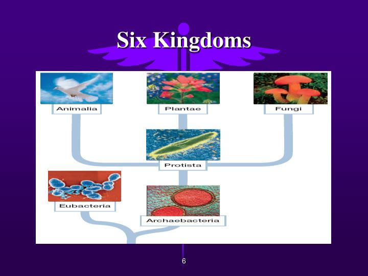 Six Kingdoms