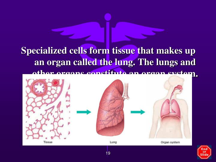 Specialized cells form tissue that makes