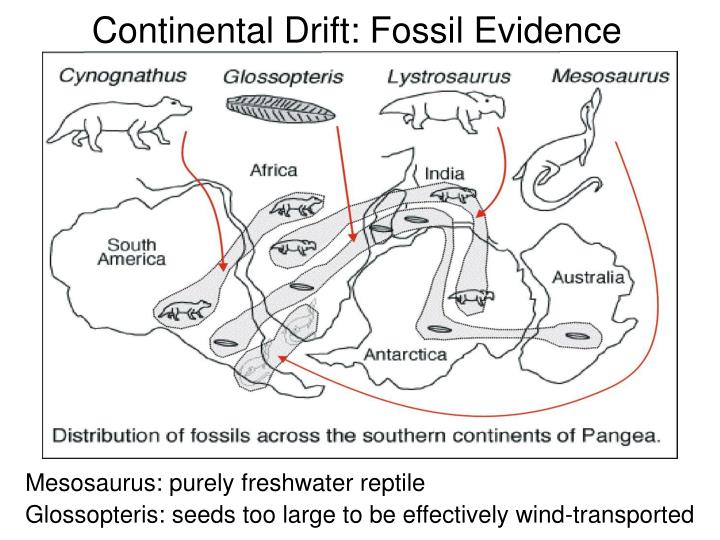 Continental Drift: Fossil Evidence