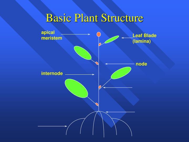 Basic Plant Structure