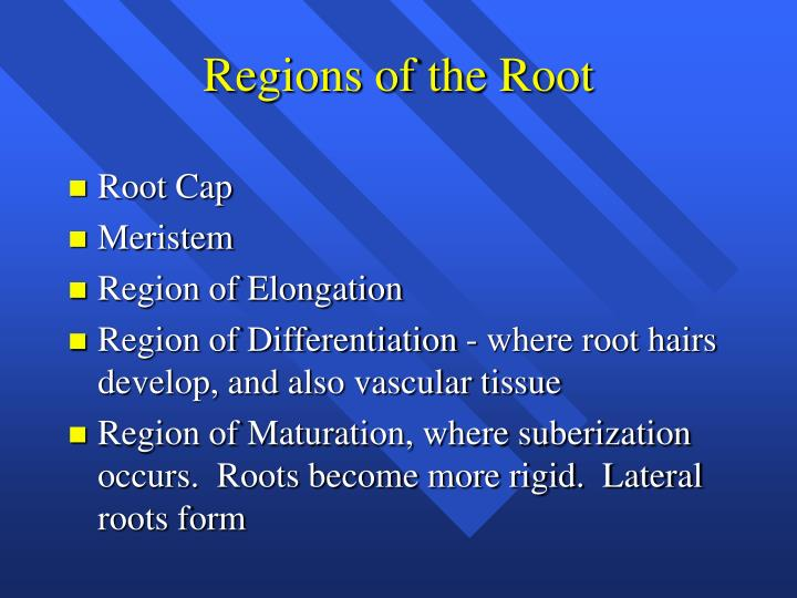 Regions of the Root