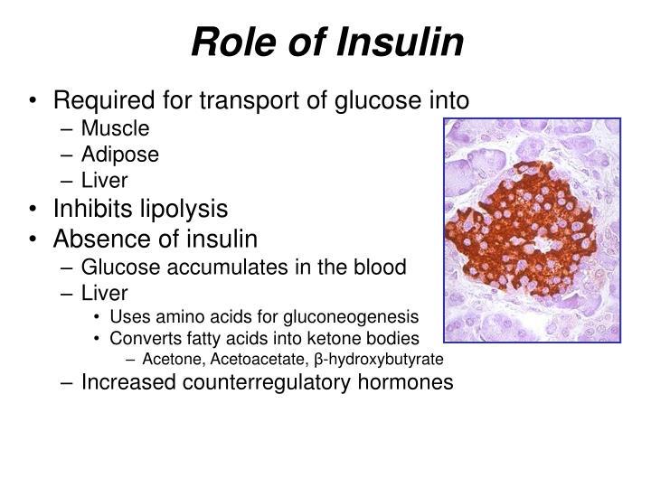 Role of Insulin