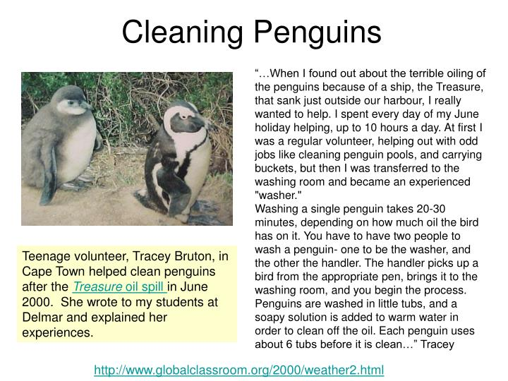 Cleaning Penguins