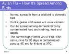 avian flu how it s spread among birds