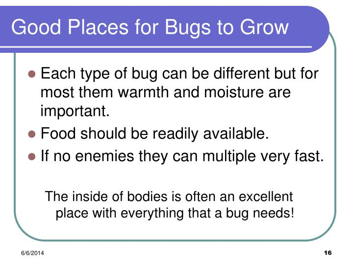 Good Places for Bugs to Grow
