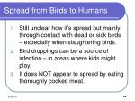 spread from birds to humans