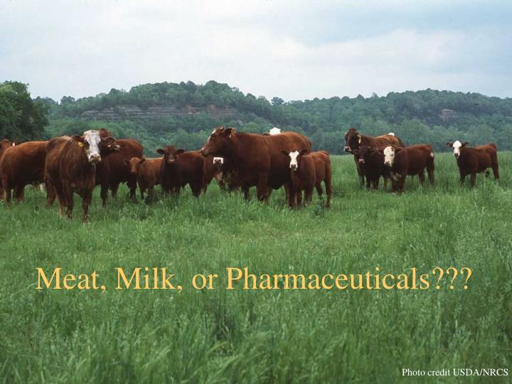 Meat, Milk, or Pharmaceuticals???