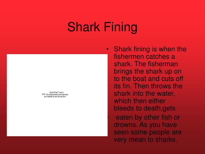 Shark Fining