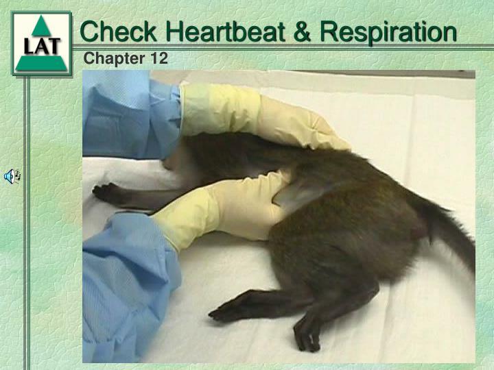 Check Heartbeat & Respiration