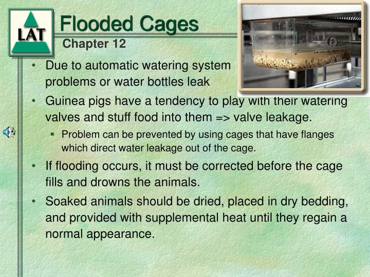 Flooded Cages