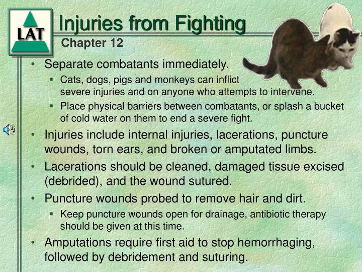 Injuries from Fighting