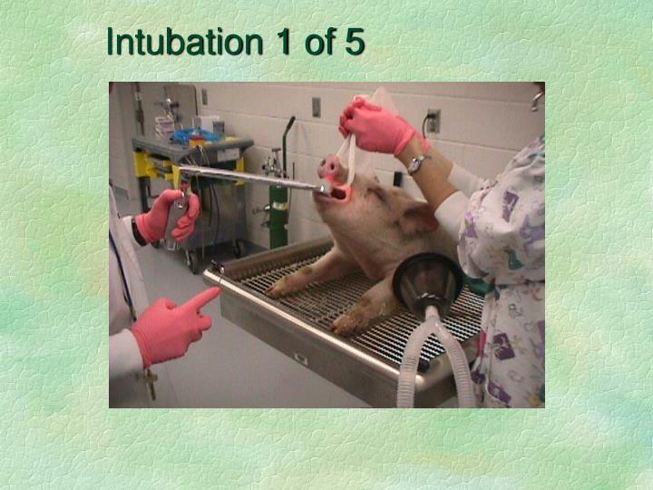Intubation 1 of 5
