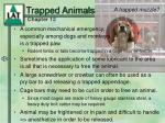 trapped animals