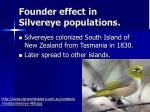 founder effect in silvereye populations