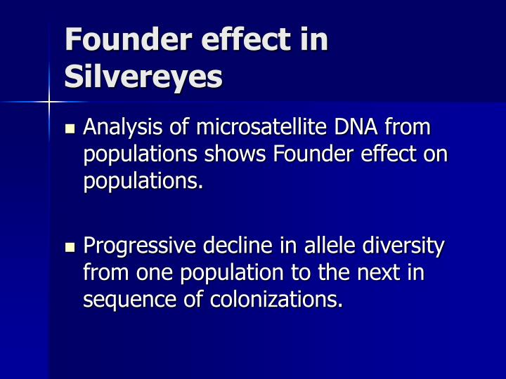 Founder effect in Silvereyes