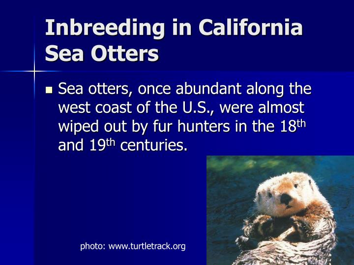 Inbreeding in California Sea Otters