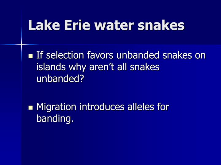 Lake Erie water snakes