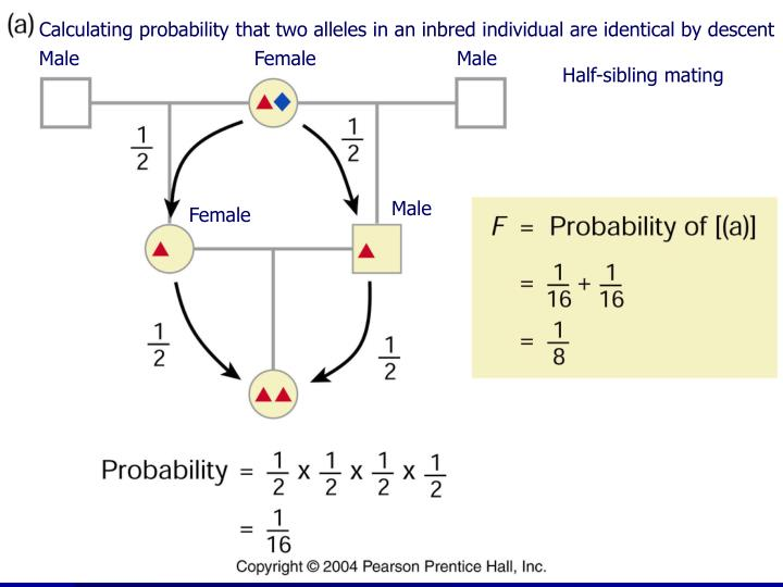 Calculating probability that two alleles in an inbred individual are identical by descent