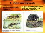 a order monotremata