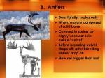 b antlers