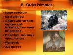 e order primates