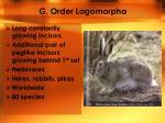 g order lagomorpha