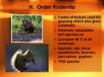 h order rodentia