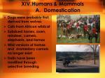 humans mammals a domestication